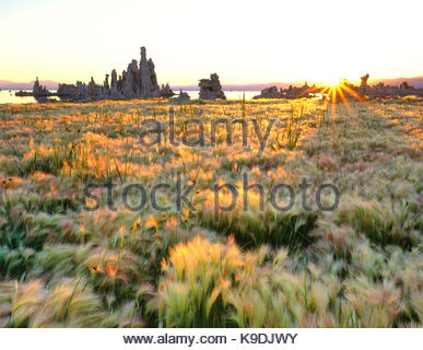 Rising Sun on Wild Barley and Tufa Formations, Mono Lake, Mono Basin National Forest Scenic Area, California - Stock Photo