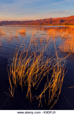 Submerged Brush and Marsh at Sunset, Stillwater National Wildlife Refuge, Nevada - Stock Photo