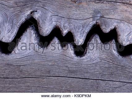 Weathered Crack in Engelmann Spruce, Lizard Head Wilderness, San Juan National Forest, Colorado - Stock Photo