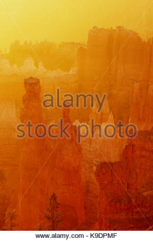 Dawn with Golden Light, Bryce Canyon National Park, Utah - Stock Photo