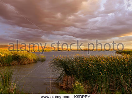 Marsh at Sunset, Stillwater National Wildlife Refuge, Nevada - Stock Photo