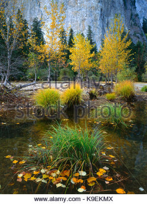 Grasses and Fall Leaves in the Merced River, Yosemite National Park, California - Stock Photo