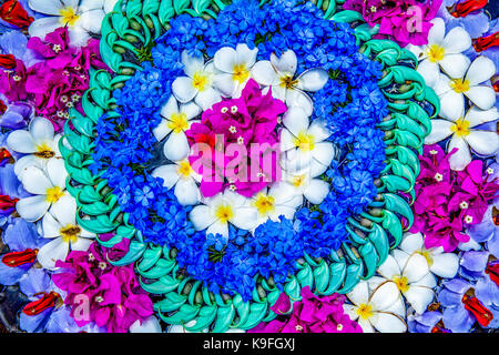 Colorful, abstract pattern of tropical flower blossoms arranged in circles on display in a garden. - Stock Photo
