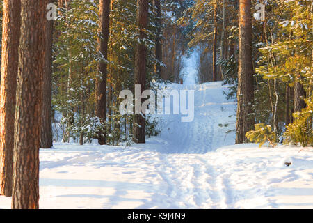 the winter forest. very cold and a lot of snow. russia - Stock Photo