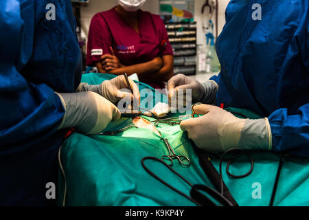 cat at the vet´s undergoing surgery - Stock Photo