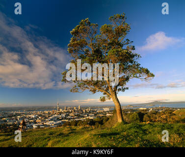 New Zealand. Auckland. High viewpoint of city from Mount Eden with tree. - Stock Photo