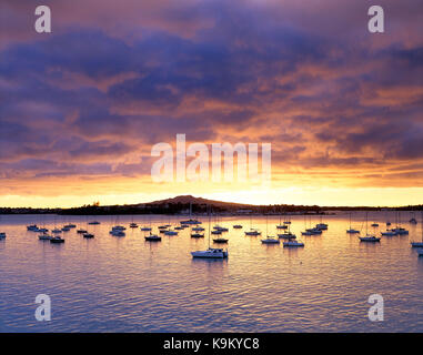 New Zealand. North Island. Auckland. Rangitoto. Devonport. Harbour view ith moored yachts at sunrise. - Stock Photo