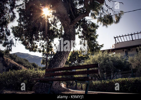 bench under a big tree with the sun shining in the background at the noon - Stock Photo