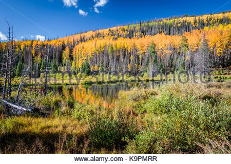 Bachelor Loop, Creede Colorado in the fall with reflections of golden aspens in the pond - Stock Photo