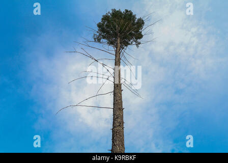 A lonely tree near Garnet Ghost Town in Montana - Stock Photo
