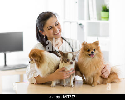 Veterinarian embraces three dogs in vet clinic - Stock Photo
