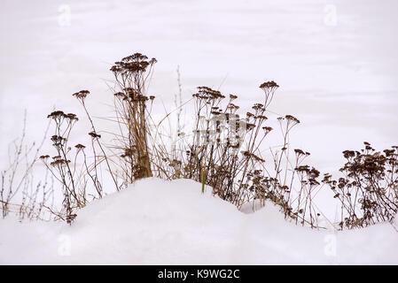 Winter Minimalism - Stock Photo