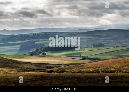 Alemoor, Roberton, Hawick, Scottish Borders, UK. 23rd September 2017. Black Face sheep graze on the Hawick hills - Stock Photo