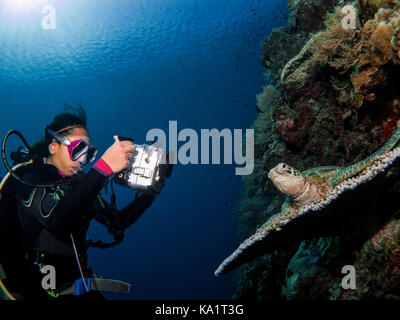 Female scuba diver filming a turtle under water - Stock Photo