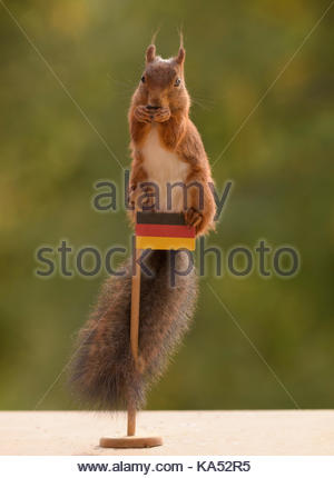 red squirrel is standing on a flag of Germany - Stock Photo