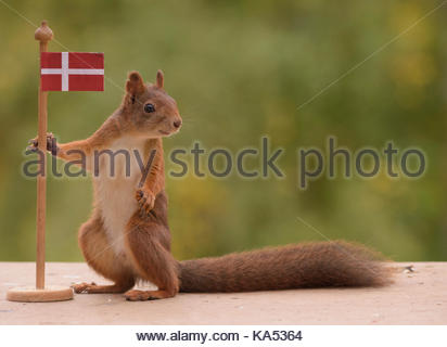 red squirrel is holding a flag of Denmark - Stock Photo