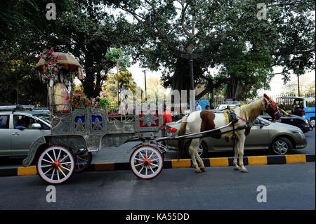 Horse cart at, Apollo, Bandar, mumbai, maharashtra, India, Asia - Stock Photo