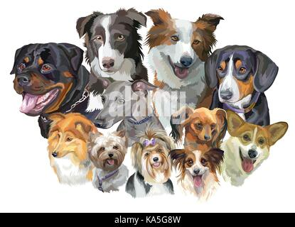 Set of colorful vector portraits of dog breeds (Rottweiler, border collie; toy Terrier, papillon, Pembroke Welsh - Stock Photo