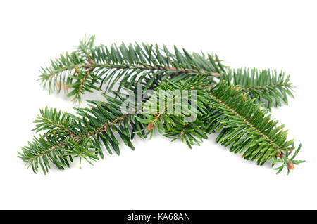 Evergreen pine tree branch decoration on white background - Stock Photo