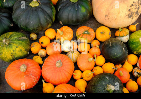 selection of colourful gourds - Stock Photo