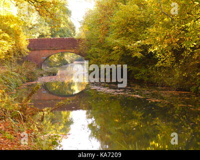 The Basingstoke Canal - Stock Photo