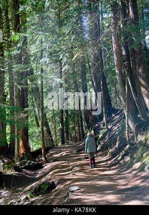Grove of the Patriarchs, Mount Rainier national Park, Washington State, USA - Stock Photo
