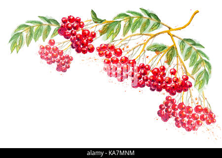 Beautiful watercolor hand drawn composition with branches of Rowanberry and leaves, isolated on the white horizontal - Stock Photo