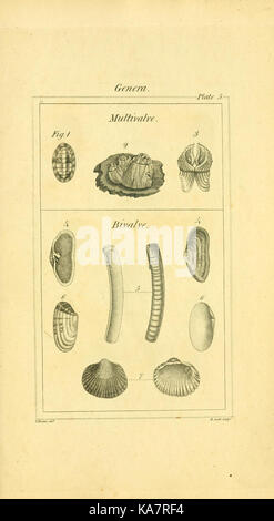 The elements of conchology; or Natural history of shells (9199422047) - Stock Photo