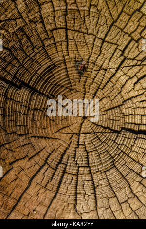 Tree rings of an old wooden log, part of of a historic farmstead in the Norwegian Folk Mueum / NORSK FOLKEMUSEUM, - Stock Photo
