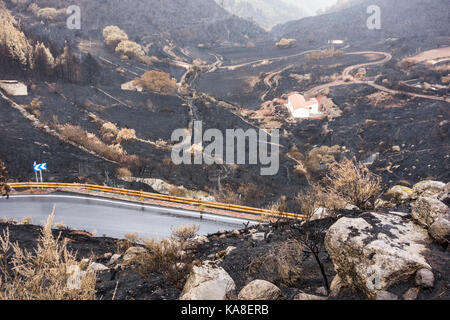 Gran Canaria, Canary Islands, Spain, 25th September, 2017. Mountain roads reopen 5 days after huge forest fire raged through 2,800 hectares of Pine forests. One 60 year old woman died in the fire as she tried to round up livestock near her mountain small holding. Hundreds of people hand to be evacuated from mountain villages. PICTURED: A close call for this mountain farm, surrounded by charred trees and scrubland. Credit: ALAN DAWSON/Alamy Live News