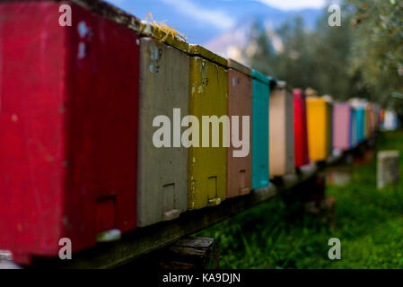 Colorful boxes n the olive groves above Riva del Garda, Italy - Stock Photo