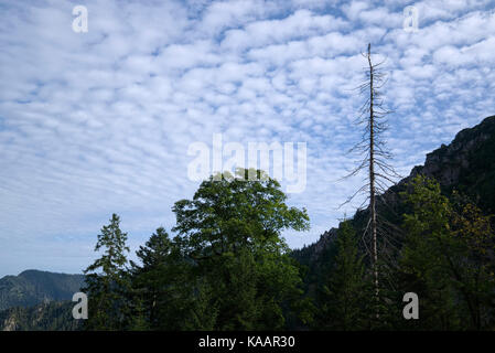 bare tree in front of a sky with with fluffy clouds, Bavaria, Germany - Stock Photo