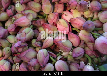 Pink Lotos Floweres in the Temple - Background - Stock Photo