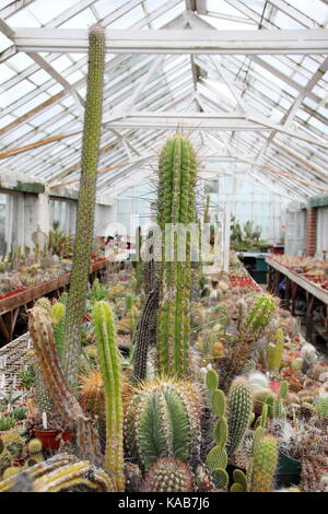 A private collection of cactus and plants on display alongside plants for sale in the large greenhouses at Oak Dene - Stock Photo