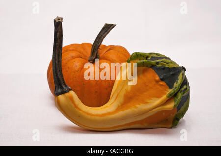 A small pumpkin grouped with a multi colored gourd on a white back ground - Stock Photo