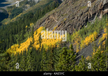 Fall Colors in Kananaskis Alberta Canada.  Kananaskis Country consists of several parks. - Stock Photo