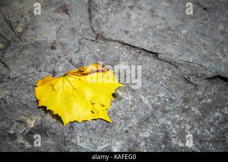 Single yellow leaf on stone - Stock Photo