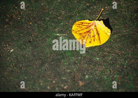 Single yellow leaf on concrete - Stock Photo