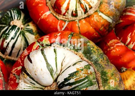 Big and beautiful 'Turks Turban' or French Turban Squashes - Stock Photo