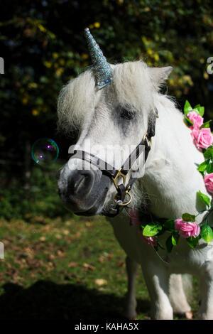 A white unicorn pony with flowers around neck - Stock Photo