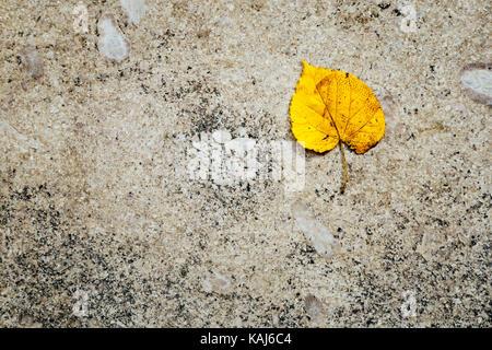 Single yellow leaf on marble slab - Stock Photo