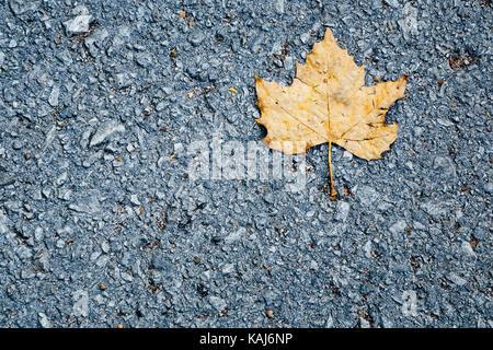 Single yellow leaf on asphalt - Stock Photo