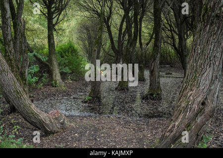 fairy scary forest in Russia, autumn, halloween, holiday - Stock Photo