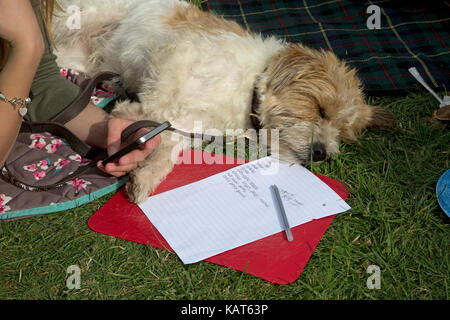Teenagers hand holding mobile phone sleeping terrier and to do list Cotswolds UK - Stock Photo