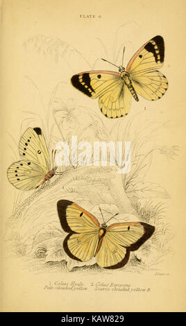 The natural history of British butterflies (Plate 6) (6076675443) - Stock Photo