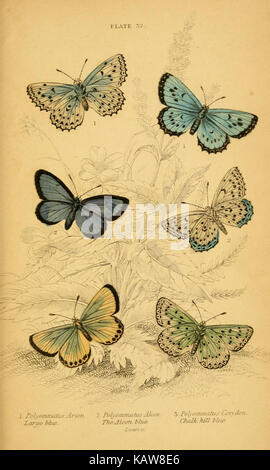 The natural history of British butterflies (Plate 32) (6077222330) - Stock Photo