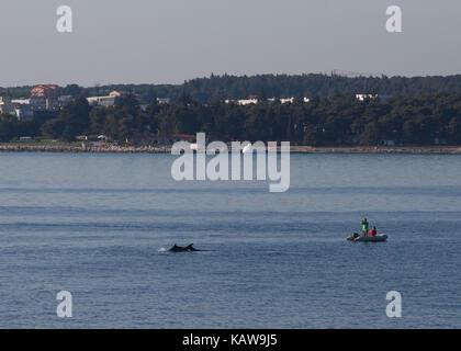 Couple watching dolphins swimming in sea, Lanterna, Novigrad, Croatia. - Stock Photo
