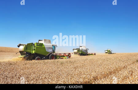 A few combines cutting a swath through the middle of a wheat field during harvest - Stock Photo