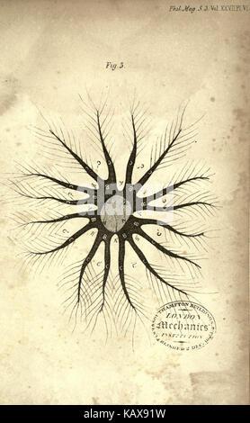 The London, Edinburgh and Dublin philosophical magazine and journal of science BHL2466436