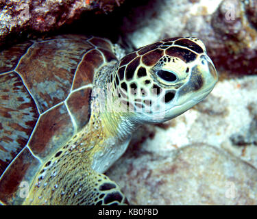 Sea Turtle Portrait - Stock Photo